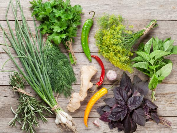 edible herb plants